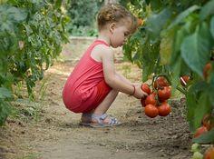 beautiful beds with tomatoes - Поиск в Google