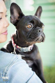 Los angeles modern dog photography. french, bulldog, frenchie, photoshoot, session, photography, puppy, outdoor, ideas, cute, black, santa monica, bond, bonding, dog, owner, bench, park, dog, animals, pets, portrait, inspiration,