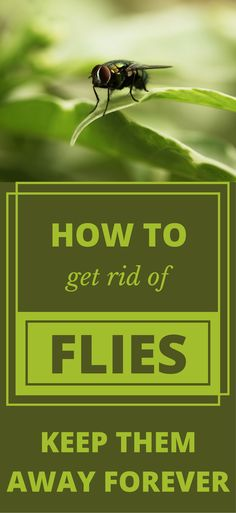 How To Get Rid Of Flies Keep Them Away Forever