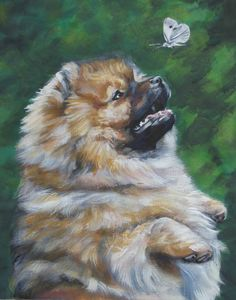 pomeranian and butterfly