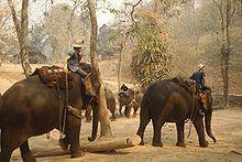Éléphant — Wikipédia