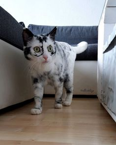 Cute Pets 💗 CuteCats And Funny kittens doing funny things Welcome to Pets Ya, a channel dedicated to cute, fluffy cats and curious, rambunctious dogs. Cats Diy, Cute Cats And Kittens, Baby Cats, I Love Cats, Cool Cats, Pretty Cats, Beautiful Cats, Animals Beautiful, Beautiful Gorgeous