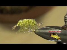Scud - Scud Fly Tying Instructions, Recipe and How To Tie Tutorial - fly fishing video channel - Global FlyFisher