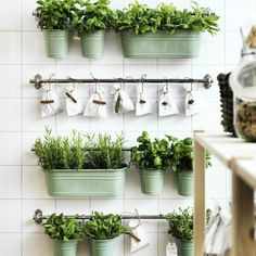 Horta na cozinha: Vasos em cores claras presos a porta toalhas.