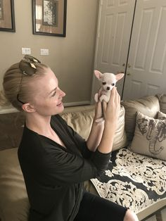 Effective Potty Training Chihuahua Consistency Is Key Ideas. Brilliant Potty Training Chihuahua Consistency Is Key Ideas. Teacup Chihuahua, Chihuahua Love, Chihuahua Puppies, Cute Puppies, Cute Dogs, Chihuahuas, Chiweenie Dogs, Awesome Dogs, Best Dog Photos