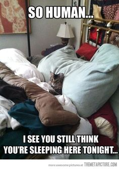 my cat..... and when I do fall asleep he is quick to remind me that he also wants to sleep in the bed! ...jerk
