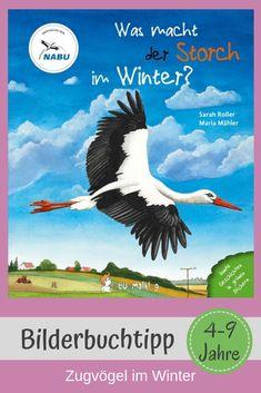 Was tun Störche im Winter? Die hübschen, großen Vögel sind Fruchtbarkeitssymbol, kommen in Kinderliedern vor und lassen sich in der Natur wunderbar beobachten. Kein Wunder, dass Kinder Interesse an ihnen haben. Doch was macht der Storch, wenn Winter ist? Wo fliegen Zugvögel hin? Eine spannende Frage, die mit diesem tollen Sachbilderbuch geklärt wird. Auch für die Grundschule geeignet. Mehr über dieses und andere Kinderbücher erfahrt ihr auf Kinderbuch-Detektive.de, einem Kinderbuchblog. Kindergarten, Movies, Movie Posters, Anton, Crowns, Teaching Geography, Bird Migration, Kids Reading, Nursery Songs