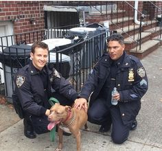 jamie and sergeant with puppy Cbs Tv Shows, Movies And Tv Shows, Blue Bloods Jamie, Tom Selleck, Family Show, Chicago Pd, Popular Shows, Murder Mysteries, Por Tv