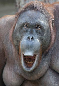 Happy Orangutan ✿⊱╮