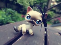 #lps #outside #lps_photography #Петы #ladycat #kissalps #shorthair #стоячка McKenzie