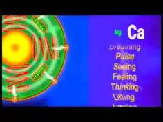 This video demonstrates with animation the interaction of calcium and magnesium at a cellular level. By Andrea Rosanoff, PhD, Directing Scholar, Center for Magnesium Education & Research.