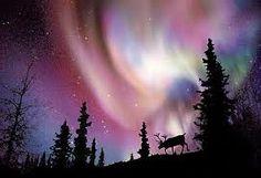 northern Quebec aurora  canada. moose