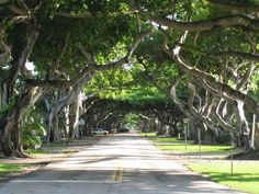 Coral Gables, Miami, FL Spectacular drive