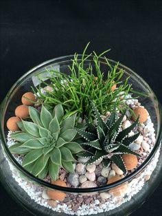 Succulent Arrangements Glass Cactus Ideas For 2019 Succulent Gardening, Garden Terrarium, Succulent Terrarium, Cacti Garden, Indoor Gardening, Indoor Herbs, Terrarium Ideas, Fairies Garden, Plants Indoor