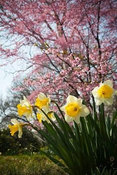 Welcome Spring, Spring Sign, Spring Is Here, Spring Day, Spring Blooms, Spring Flowers, Flowers Garden, Spring Scenery, Small Trees