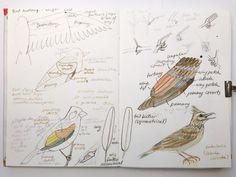 Common European Birds - An Ongoing Painting Project 10
