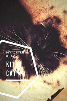 This is my kitten, her name is Taxi! Dette er min katt, ho heter Taxi!