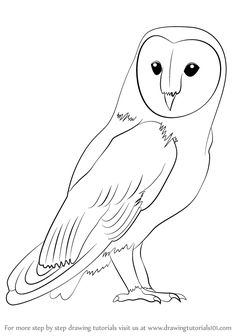 Learn How To Draw A Barn Owl Birds Step By Drawing Tutorials