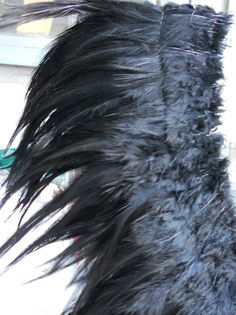 Feathers, feathers, feathers.