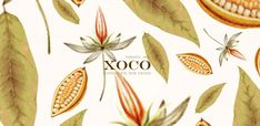 XOCO Chocolate Packaging - Mexican Chocolate Done Right
