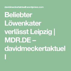 Beliebter Löwenkater verlässt Leipzig | MDR.DE – davidmeckertaktuell
