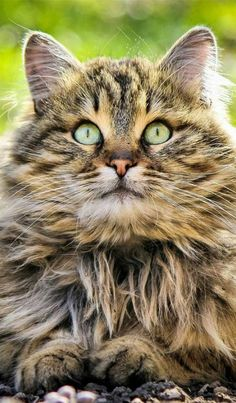 This looks like a 'guard cat'. Nothing gets by her1 More