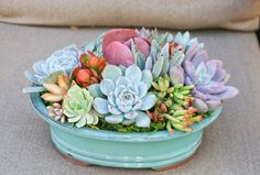Succulent arrangement in 10 bonsai by iDreamOfSucculents on Etsy