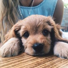 animals, cute, puppy, yes