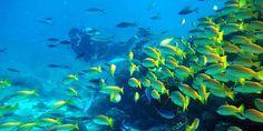Diving in tamarin mauritius plonger ile maurice (3)
