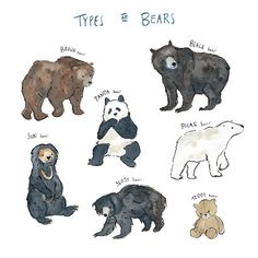 Types of bears - Tragen Cute Animal Drawings, Animal Sketches, Art Drawings, Art And Illustration, Illustrations, Watercolor Animals, Watercolor Art, Bear Art, Cute Creatures