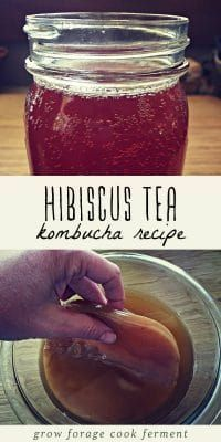 This hibiscus kombucha is a wonderfully refreshing drink on a hot summer day! Learn how to ferment this delicious kombucha recipe using hibiscus tea. Kombucha Flavors, Kombucha Scoby, Kombucha Fermentation, Refreshing Drinks, Yummy Drinks, Healthy Drinks, Healthy Food, Nutrition Drinks, Tea Recipes