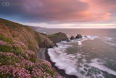 Photograph Atlantic Pinks by Adam Burton on 500px