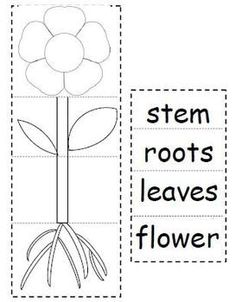 Children can label the parts of a plant, from Super
