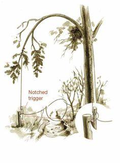 wilderness survival traps