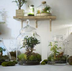 """Découvert sur le blog  """"l'art de la curiosité"""", des objets vivants : plantes créant leur propre écho système dans ces bocaux. Superbe."""