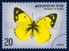 Postage Stamps of Butterfly Series, Colias erate, Insect, Yellow, black, 1976 06 20, 나비 시리즈(제3집), 1976년06월20일, 1021, 노랑나비, postage 우표