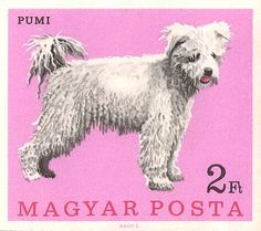 1967 Hungary Pumi Dog Postage Stamp,pumi,dog,herding terrier,sheep dog,hungary,hungarian breed,vintage stamp,vintage postage,stamp,ephemera,canine,breed,philately,westminster,dog art,vintage dog,canine art,hungarian stamp,hungarian herding terrier