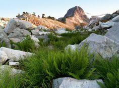 Lake Ann (Mt. Baker Highway) — Washington Trails Association