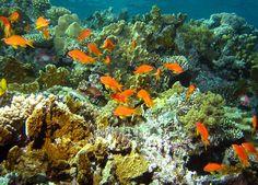 Viaggi in Egitto, Mar Rosso Egitto  http://www.italiano.maydoumtravel.com/Pacchetti-viaggi-in-Egitto/4/0/