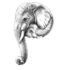 A to Z Tatto Drawings – Top Fashion Tattoos Tatoo Elephant, Elephant Sketch, Elephant Tattoo Design, Elephant Art, Daddy Tattoos, Family Tattoos, Tatoos, Baby Elefant Tattoo, Tattoo Sketches