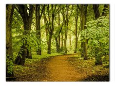 Waldweg Leinwand