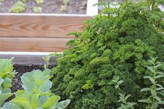 New to companion planting? Here's a quick and easy guide to this awesome gardening technique. https://www.weedemandreap.com/companion-planting-made-easy-peasy/