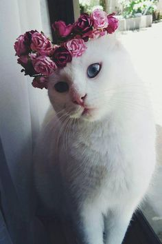 cat is in a selfie mood. -