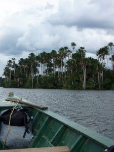 1996 - 2010 ( Selva) Amazon, Peru