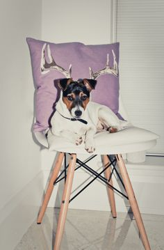 Look at this little nugget on an Eames Molded Plastic Chair rocking those antlers.