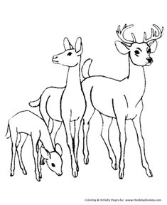The 13 Best Deer Coloring Pages Images On Pinterest
