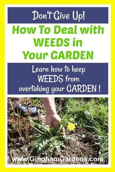 Learn some excellent, practical tips for getting rid of weeds in your gardens, including questions answered like, Do Homemade Weed Killers Really Work? Or, Are DIY Weed Killers Safe? Also includes tips for Weed Prevention in Garden and the Best Ways to Keep a Garden Weed Free. #bestwaytogetridofweeds #howtogetweedsoutofaflowerbed Vegetable Garden For Beginners, Backyard Vegetable Gardens, Gardening For Beginners, Weed Killer Homemade, Weed Killers, Pulling Weeds, Garden Weeds, Weed Seeds, Garden Maintenance