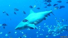 A very interesting article about the science behind shark attacks