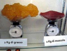 Trova la differenza tra un KG di grasso e un KG di muscoli
