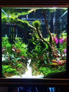 Cichlid Aquarium, Aquarium Aquascape, Aquascaping, Planted Aquarium, Aquarium Landscape, Fish Tank Terrarium, Aquarium Terrarium, Small Fish Tanks, Cool Fish Tanks
